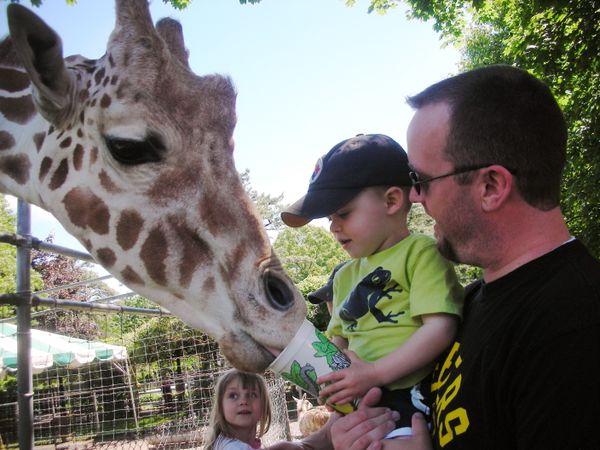 Jax_giraffe