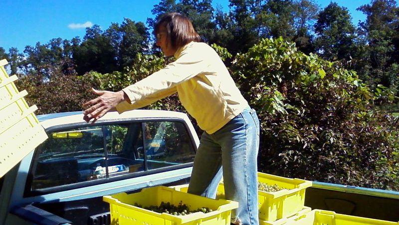 Hudson-chatham-harvest