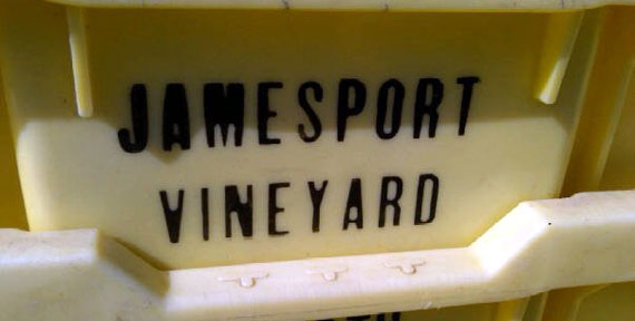 Jamesport-vineyards-harvest