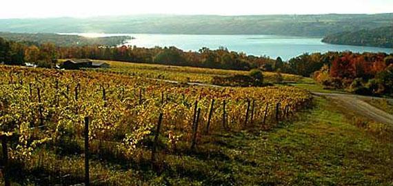 Mcgregor-vineyard