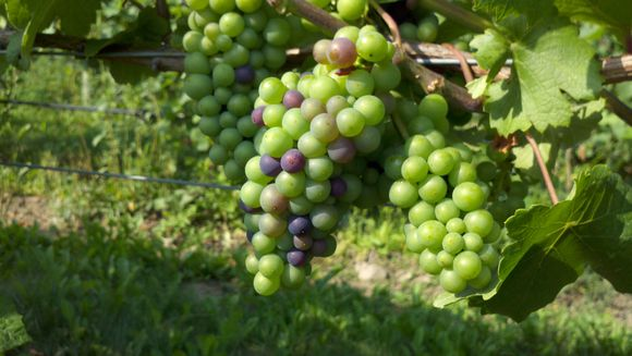 Hobbithollow_verasion
