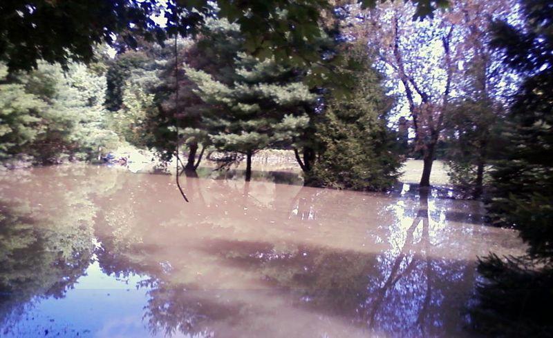 Flooded-vines