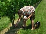 Vines2_1