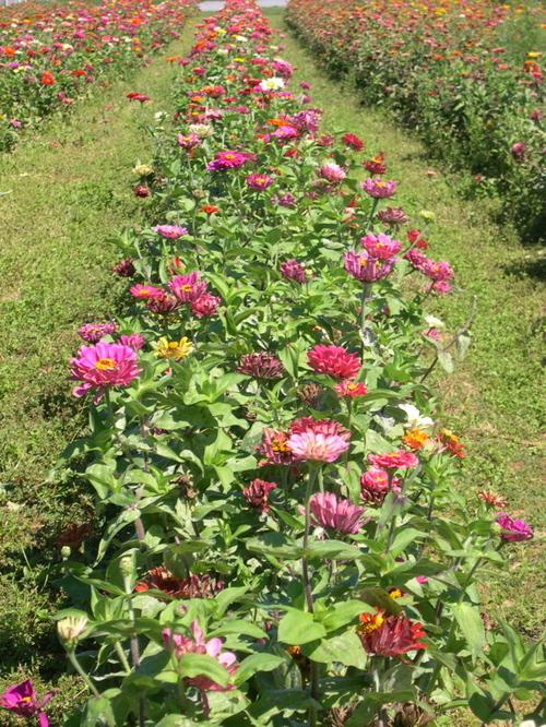 Flowers at Martha Clara Vineyards